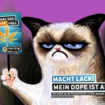 Grumpycat Prohibition wegkiffen