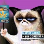 Grumpycat Prohibition wegkiffen