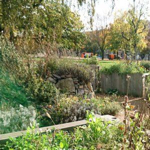 Auf den Bild ist der Garten von dem Verein Stadtgärten zu sehen. Man sieht einen Ausschnitt mit Hochbeeten und mit Kräutern bewachsenen Steinen.