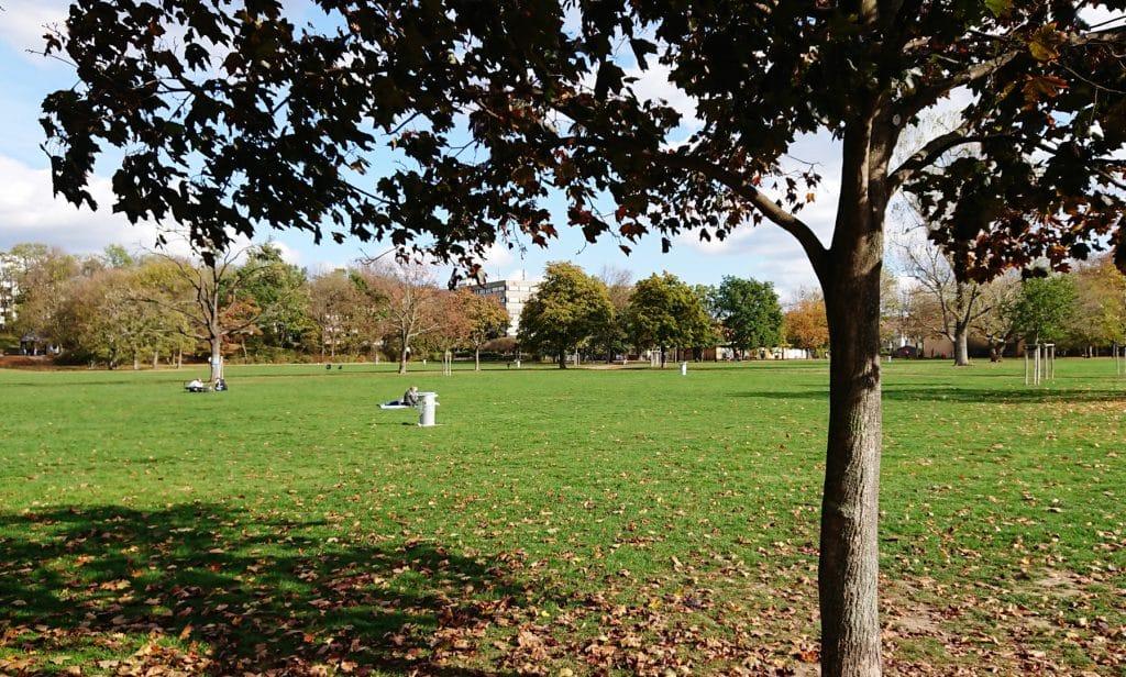 Auf dem Bild sieht man einen Ahornbaum im herbstlichen Alaunpark. Im Hintergrund sind im Gras sitzende Menschen zu sehen.